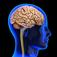 brains_57x57